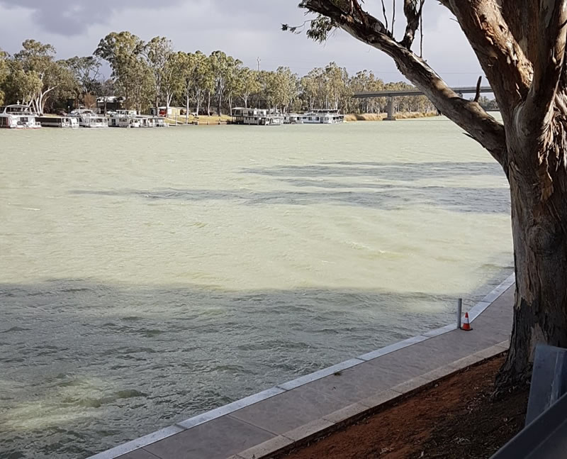 Murray River at Berri, Riverland